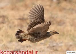 تشکیل حلقه های حفاظتی حامیان طبیعت قلعه گنج توسط اداره منابع طبیعی و آبخیزداری شهرستان قلعه گنج