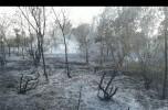 جنگلهای جگ در جبالبارز جنوبی طعمه حریق شد + تصاویر