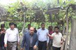 شهرستان های جیرفت و عنبرآباد نیازمند توجه ویژه دفتر توسعه روستایی و مناطق محروم ریاست جمهوری است