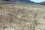 بختک خشکسالی جنوب کرمان و سویدای هلیل رود تا جازموریان
