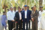 بازدید فرماندار رودبار و رئیس سازمان جهاد کشاورزی از بسته بندی خرما در روستای رضا آباد بخش مرکزی رودبار