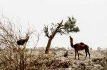 نگاهی حقوقی به مسئله حقابه و بحث انتقال آب سرشاخه های هلیل رود