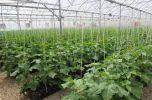 انتخاب ۴ کشاورز نمونه کشوری از جنوب کرمان