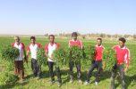 دومین جشنواره سبزی شهرستان جیرفت در روستای دشتکوچ به روایت تصاویر