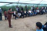دومین جشنواره محصولات گلخانه ای در جیرفت برگزار شد