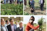 جنوب کرمان، تنها تامین کننده سیب استمرار کشور در فصل زمستان است