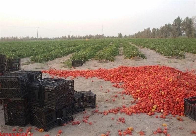 علت سریال تکراری و هرساله افت قیمت محصولات کشاورزی در جنوب کرمان