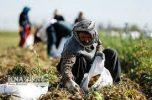 دولتیها و مجلسیها بدانند؛ بخشش بدهی کشاورزان ورشکسته، مصداق عینی عدالت است
